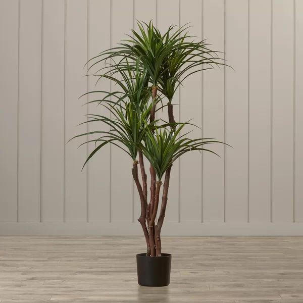 Lady Palm Home Depot
