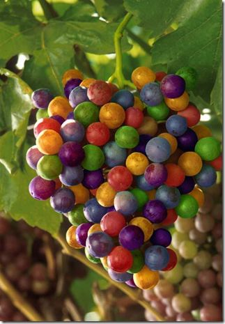 Rainbow Grapes.  Would be very cool.