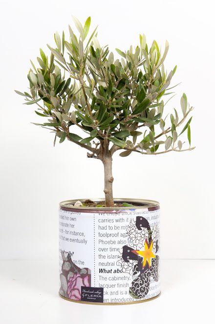 Handmade collage pot with olive tree www.fleria.gr