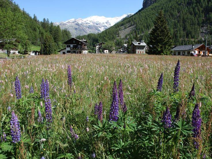 Panorama estivo di Gressoney-La-Trinité  (Valle d'Aosta) e vista sul Monte Rosa