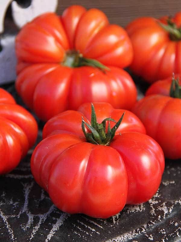 TOMATO Costoluto Florentino 20 seeds