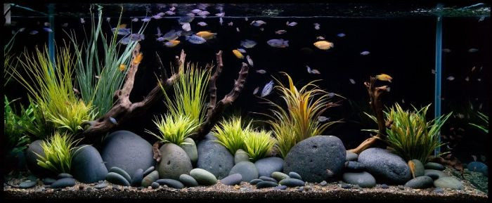how to decorate your fish tank
