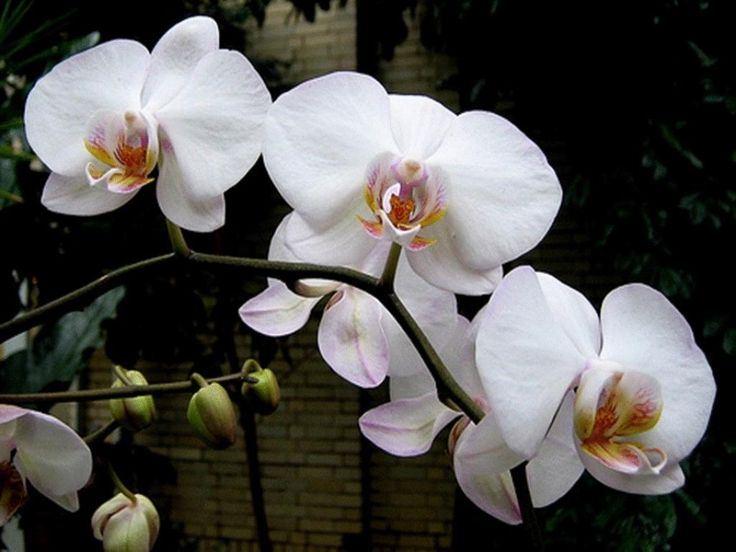 5 Secrets de base pour faire fleurir une orchidée fanée! - Trucs et Astuces - Trucs et Bricolages