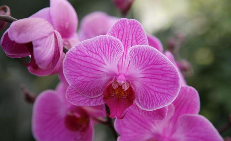Sie tragen edel anmutende Blüten mit fantastischen Mustern und von unvergleichlicher Farbenpracht – tropische Orchideen faszinieren! Der Orchideen-Experte Stefan Reisch von der Blumeninsel Mainau verrät Ihnen im Interview seine besten Pflegetipps.