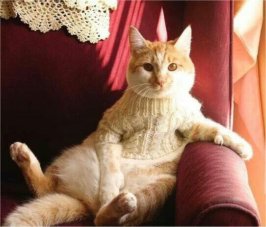 Cat Lady Knitting : Best images about knitting cats on pinterest cat