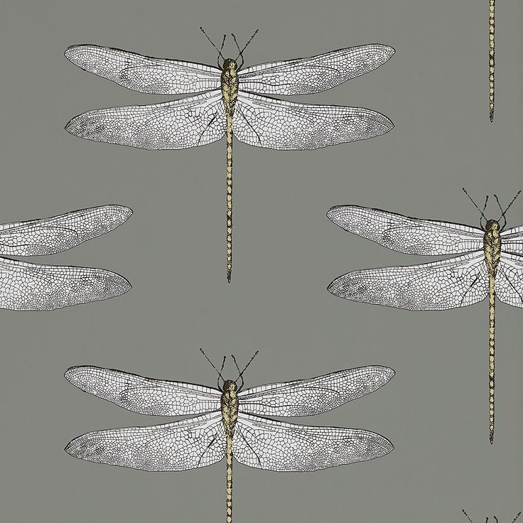 Discover the Harlequin Demoiselle Wallpaper - 111242 at Amara