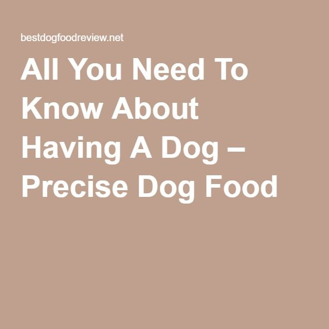 All You Need To Know About Having A Dog – Precise Dog Food