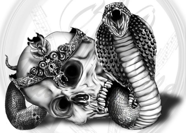 A new tattto-sketch of a King Cobra with a Skull. I wanted to add an egyptian inspired crown on the skull with snake details, which you can see close-up. Time: 9hours Tools: Photoshop
