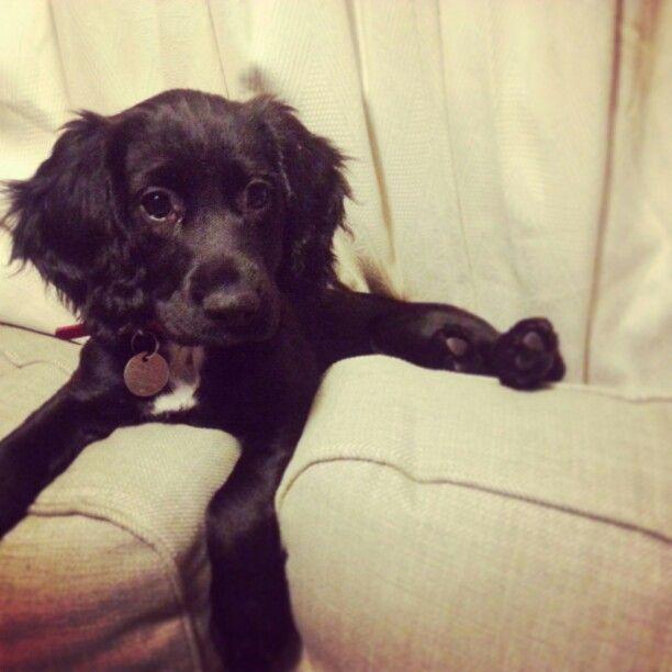 Puppy sprocker