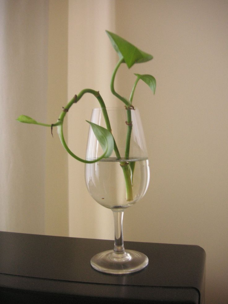 how to propagate a pothos