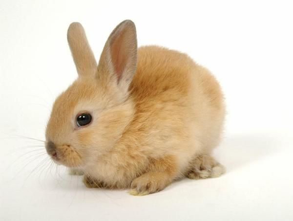 Cómo cuidar un conejo doméstico - 9 pasos (con imágenes)