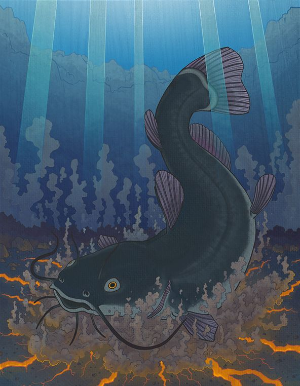 In Japanese Mythology, the Onamazu is a gigantic catfish which live in the muck and slime of waterways in Japan. They are responsible for causing earthquakes due to their heavy mass when they get excited they shake the earth with their continous violent thrashing.