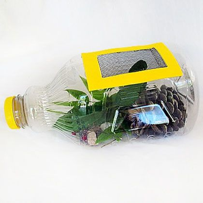Juice Bottle Bug Catcher-This craft is a great way to reuse a juice bottle while safely learning about the insects in our world. After your observations, be sure to return the critters where you found them!