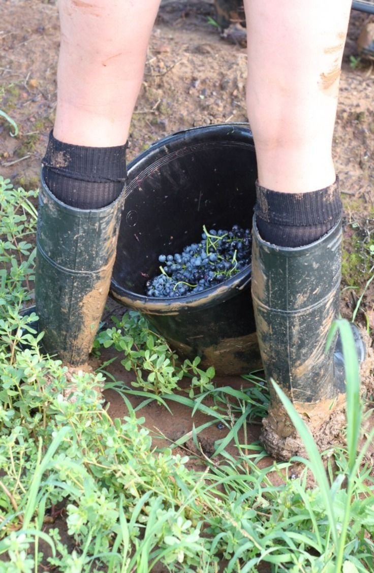 Getting down and dirty with Brokenwood Wines. Learn more >…