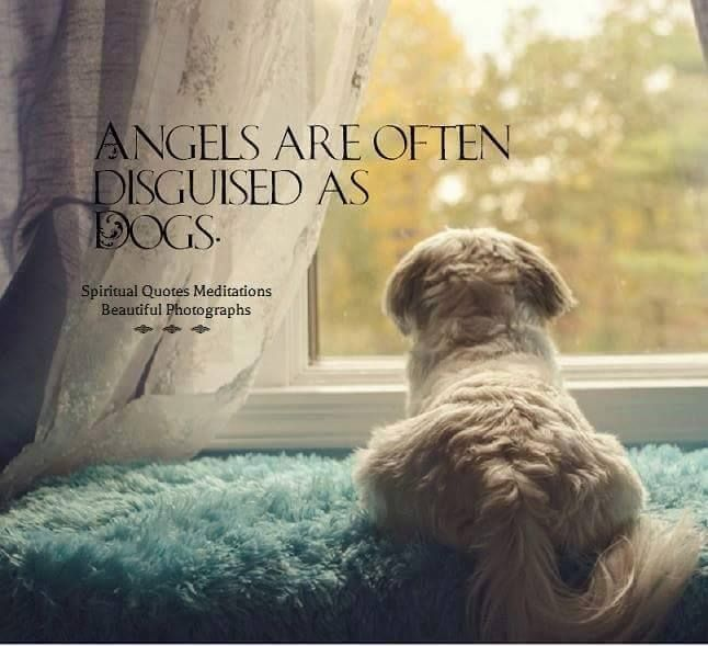 Angels are often disguised as dogs. YES, this is true..very true..