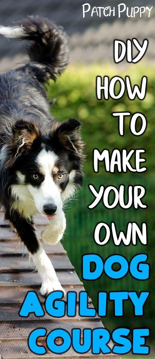 Pin By Tiffany Hale On Animals Dog Agility Dog Training Classes