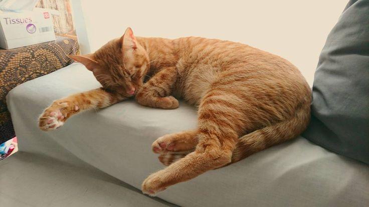 Siestecita de Bacus   #gato #cat #cats #neko #catsofinstagram #instacat #pet #chat #meow #cute #kitten #catstagram #gatos #katze #gatito #lindo #catlover #animal #gatto #kitty #miau #catlovers #pets #mascota #instapet #ilovemycat #instacats #felino #animals #gat