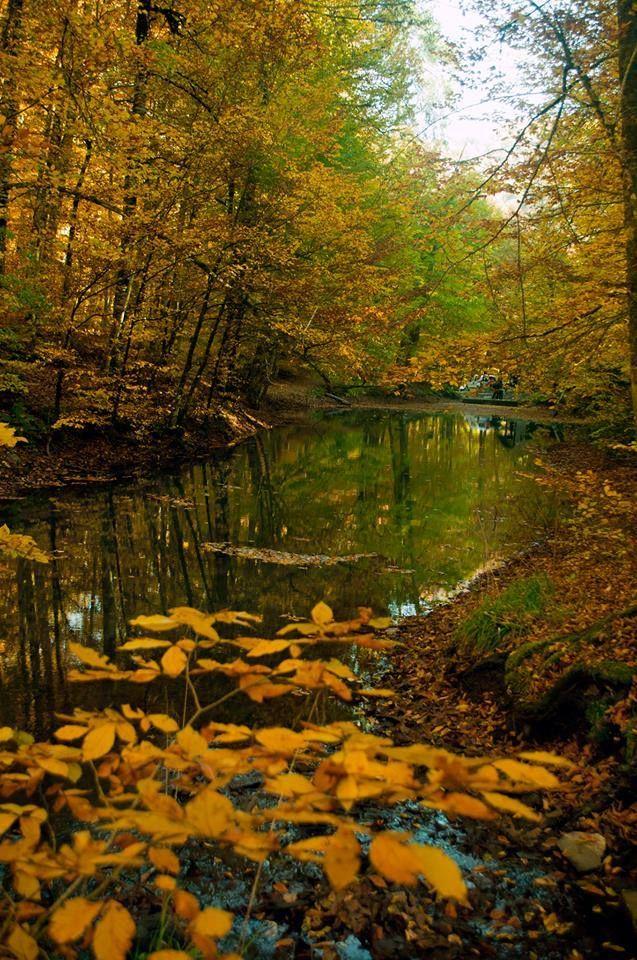 Bolu Yedigöller'de sonbahar renkleri…  Fotoğrafı gönderen: Ömer Şahin