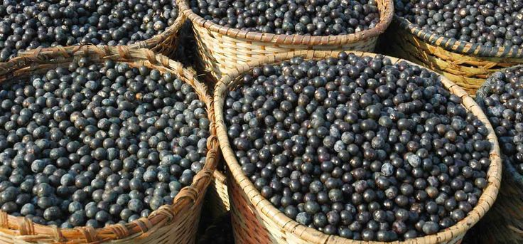 You must have heard a lot about Acai berries and their health benefits. But have you ever thought about the Acai berry side effects? Yes, there are few side effects that we will discuss in this post.