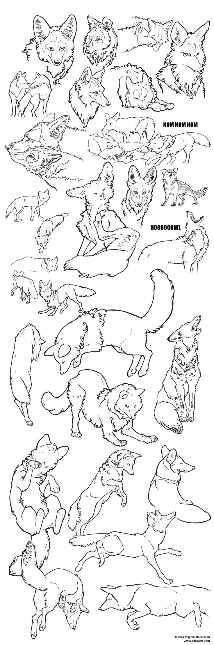 coyote sketches