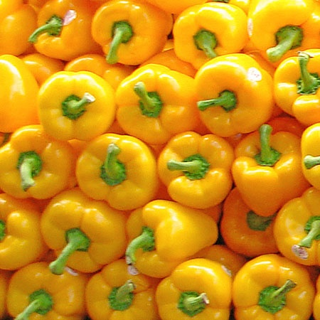 Yellow Peppers. 12 x 12, Edition of 10, $100, by ak Design, Limited Edition Fine Art Photography