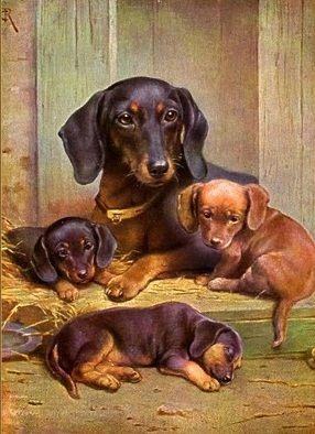 161 Best Dachshund Art Images On Pinterest Dachshund Dog