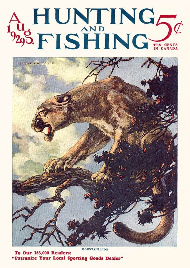 Mountain lion, Hunting and Fishing 1929-08