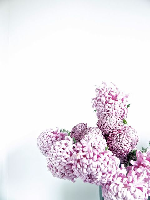 Kingsmum at Fieldwork Flowers