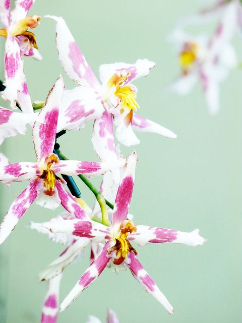 More orchids | Flickr - Photo Sharing!