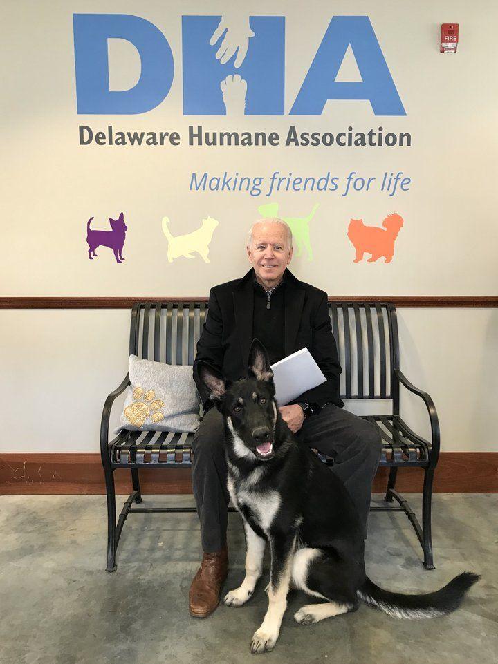Joe Biden Just Adopted An Adorable Shelter Dog Foster
