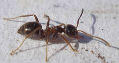 Ameisen vertreiben ohne Gift – 10 natürliche Hausmittel für die Wohnung
