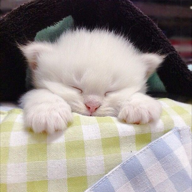 """""""A kitten provides a child with a sleepover friend for life."""" --Jo Kittinger"""