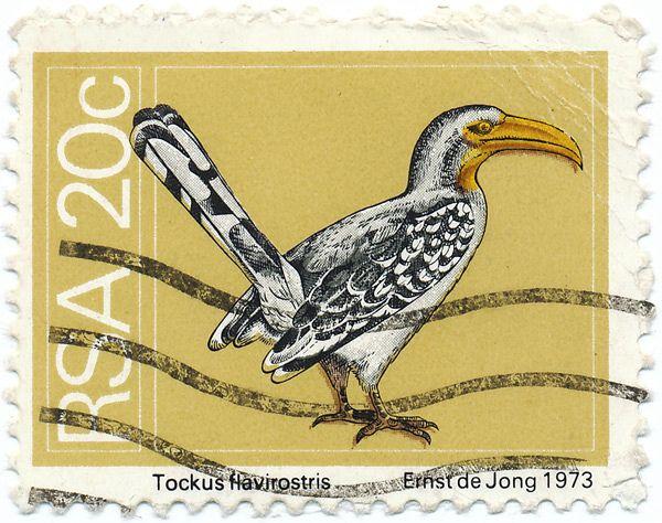 1973 South Africa Stamp - Hornbill