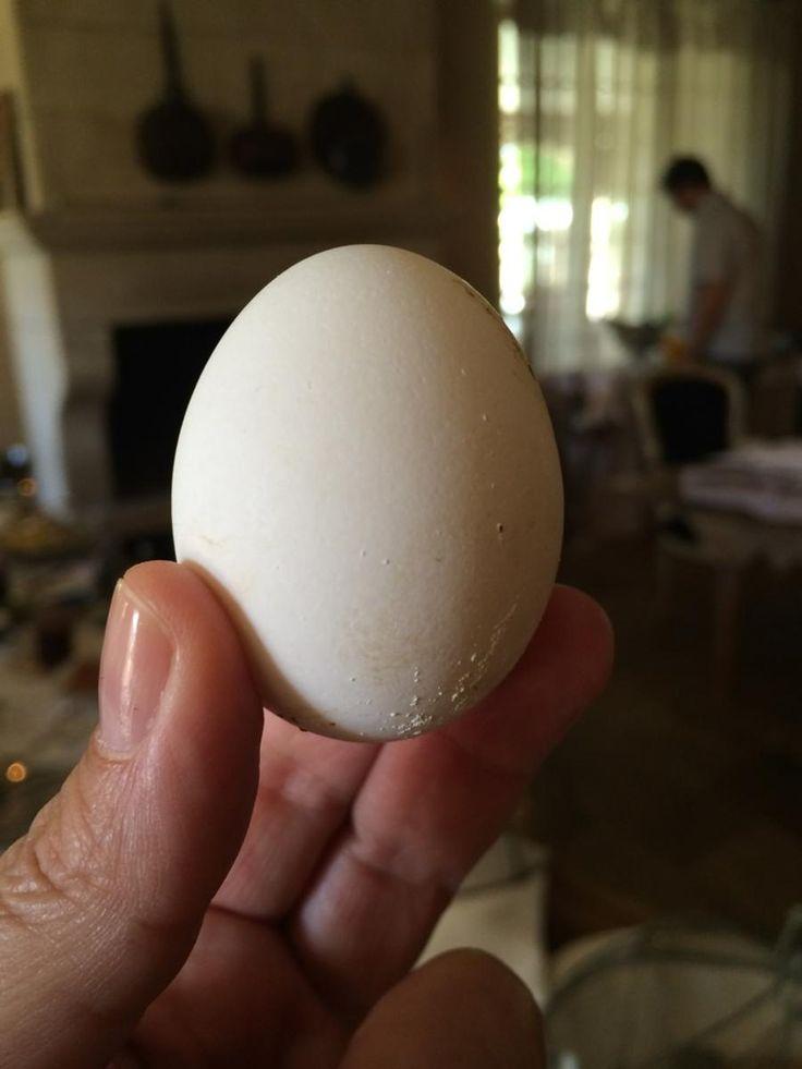 The first egg every laid at Borgo Santo Pietro!