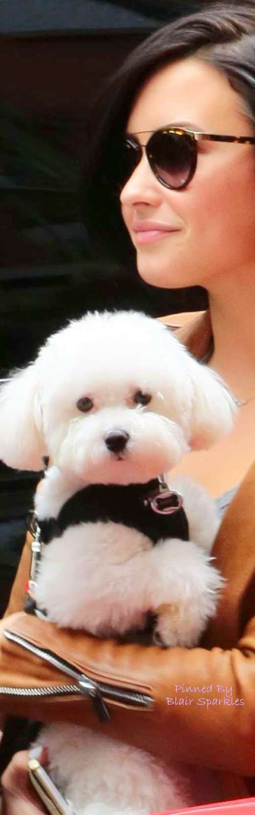 Best Bichon Frise Images On Pinterest Dogs Smile And Babies - Cute portraits baby and rescue dog