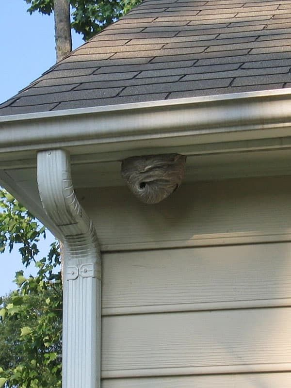 How To Get Rid Of Wasp Nest Five Spot Green Living Get Rid Of Wasps Garden Pests House Insects