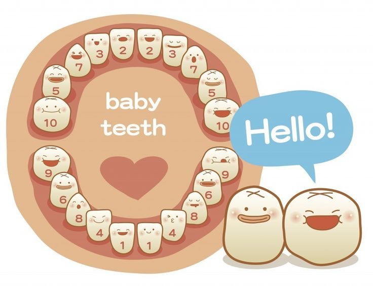 baby teeth growth sequential | Baby stuff (for someday ...