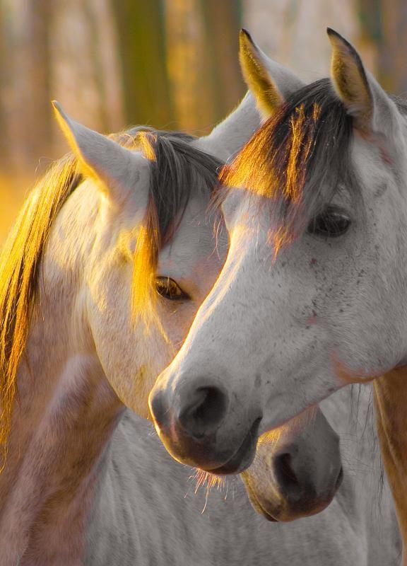 white horses in the sunlight....