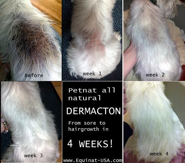 127 Best Natural Treatment Canine Dermatitis Images On