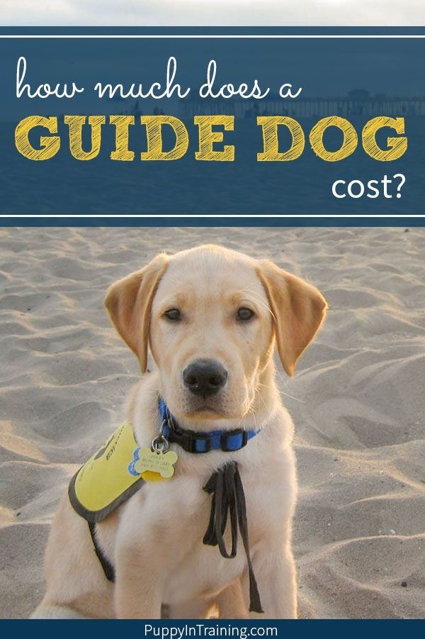 How Much Does A Guide Dog Cost Guide Dog Dogs Dog Training
