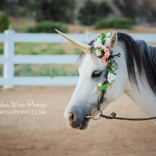 Wishpony Gold Classic Unicorn Horn for Horses Ponies