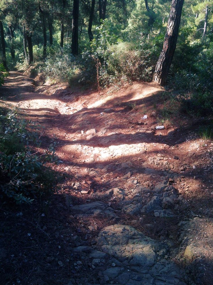 forest, downhill, rock
