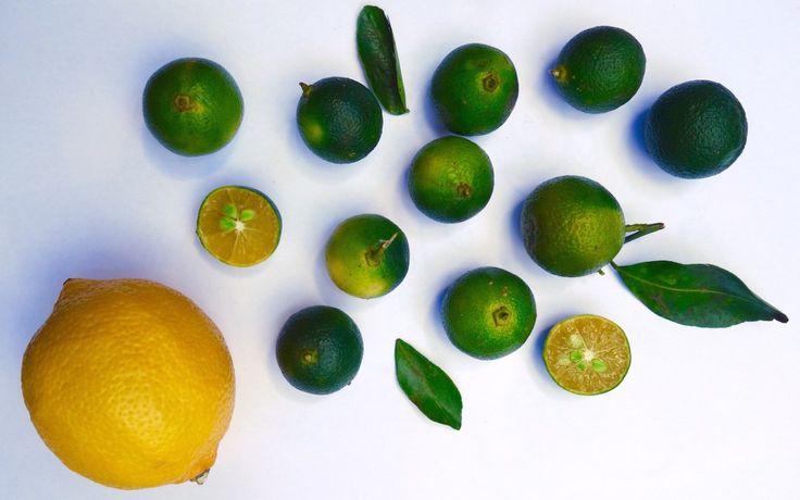"""Kalamansi - die """"Zitrone"""" der Philippinen"""