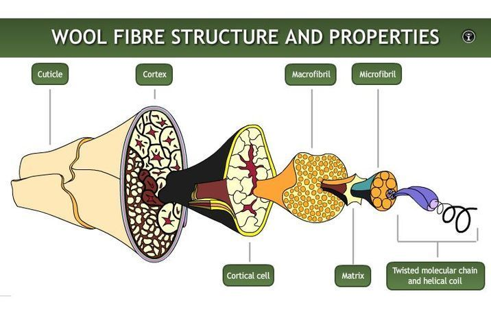 The micro structure of wool fiber consists of three main components, the cuticle, cortex and medulla.