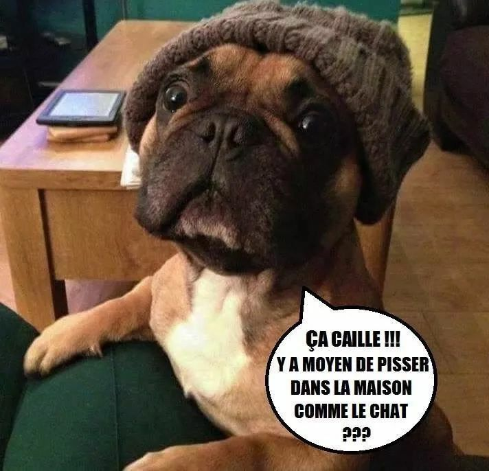 Question Logique Bouledogue Drole Humour Chiens Drole