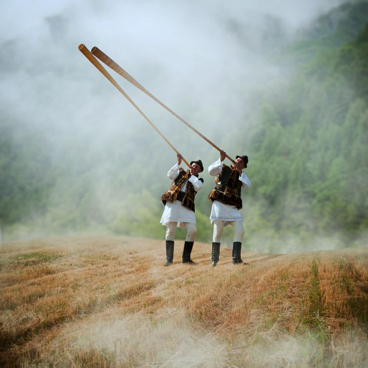 The bucium (trâmbiţă or tulnic) is a type of alphorn used by mountain dwellers in Romania. Of Dacian origin, it was used in the principalities of Moldavia and Wallachia as signaling devices in military conflicts.      The tube is made from limetree bark, wood, or (partially) from metal. It is used by shepherds for signaling and communication in the forested mountains, as well as for guiding sheep and dogs. Trâmbiţa produces sounds altogether different from those of the alphorn. #romania…