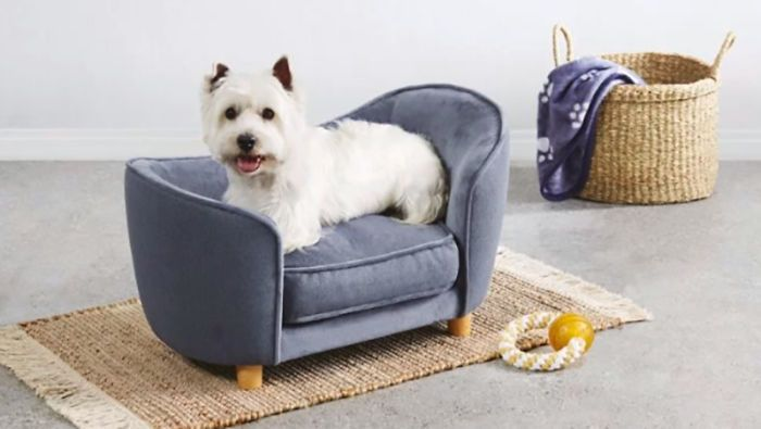 Aldi Released A Line Of Adorable Tiny Sofas For Dogs In 2020 Cute Tiny Dogs Dog Sofa Tiny Dog Beds