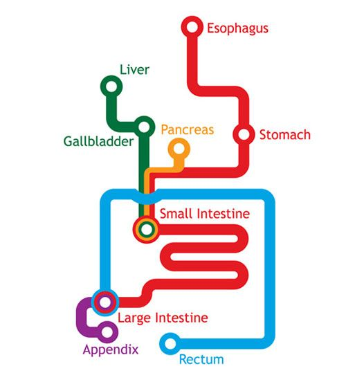 The Gastrointestinal System Represented As A Subway Map--Man, Would I Hate to Live on the End of That Blue Line