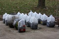 Winter seed sowing in milk jugs -