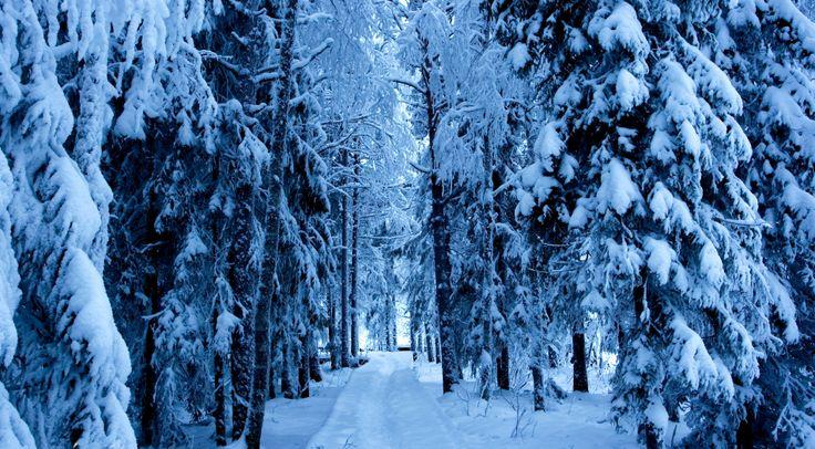snow+trees